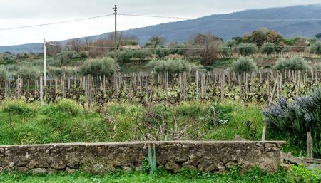 biodinamic vineyard in Sicily