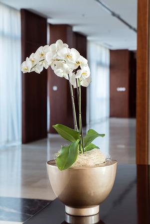 Mooie orchidee op de pot Stockfoto - 98509868