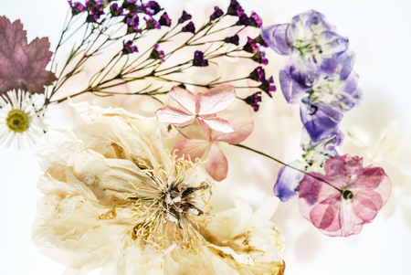 dry flowers on white background