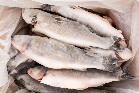 frozen fish in box Stock Photo