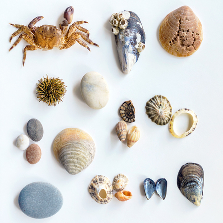 Collection of a seashells Imagens - 100205657