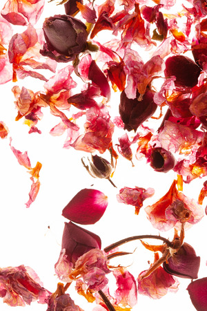 dry petals on the white Stock Photo