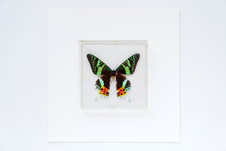 butterfly in the frame