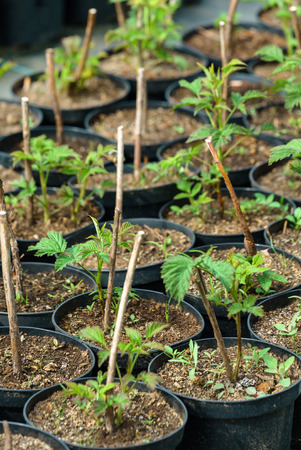 plant market in Europe Zdjęcie Seryjne