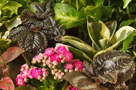 nature background  Zdjęcie Seryjne