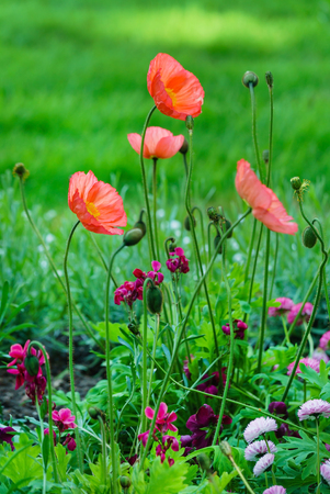 nice flowers in the park Archivio Fotografico - 101575536