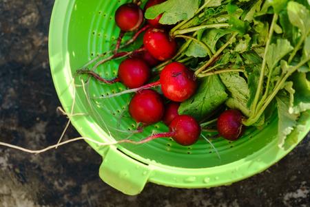 fresh radish in the bowl Reklamní fotografie