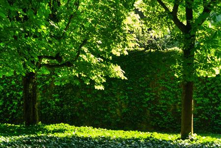 sunny summer park