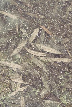 leaves under ice Stock Photo