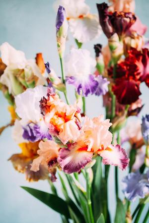 colorful iris flowers Фото со стока
