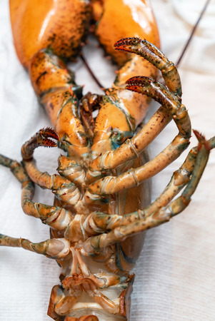 raw lobster on table Banco de Imagens