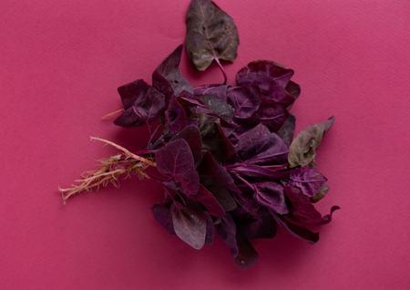 fresh purple orach Reklamní fotografie