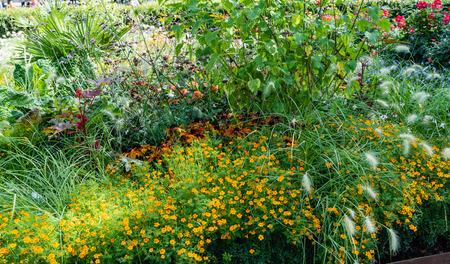 nice flowers in garden