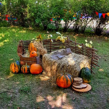 autumn farm with pumpkins Banque d'images - 108135892