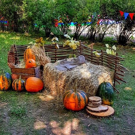 autumn farm with pumpkins Banque d'images - 108135902