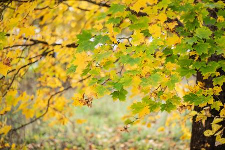 nice autumn landscape Standard-Bild - 110857125
