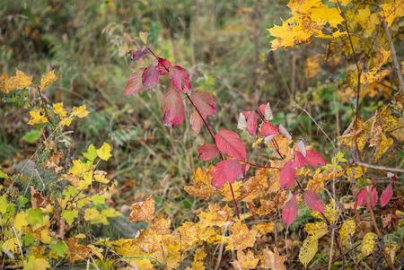 nice autumn landscape Standard-Bild - 110857138