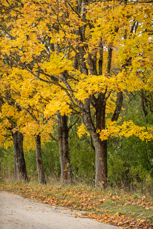 nice autumn landscape Standard-Bild - 110857178