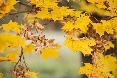 nice autumn landscape Imagens