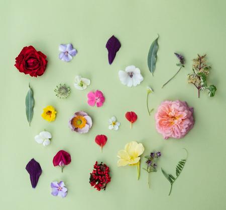nice summer flowers Stock fotó