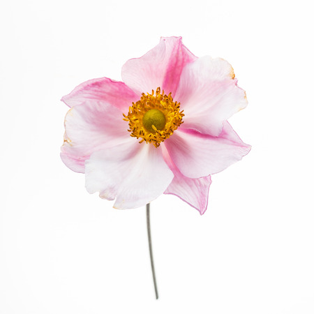 flower on the white background