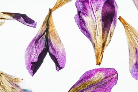 iris petals closeup Archivio Fotografico - 112539228