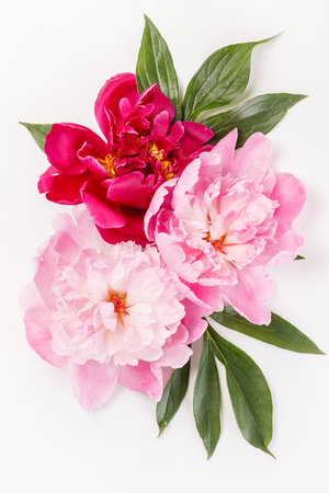 Peony flowers with leaves