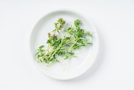 Fresh oregano on the white plate Stok Fotoğraf