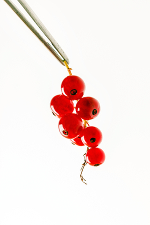 red currant berries on the white background - Image Zdjęcie Seryjne