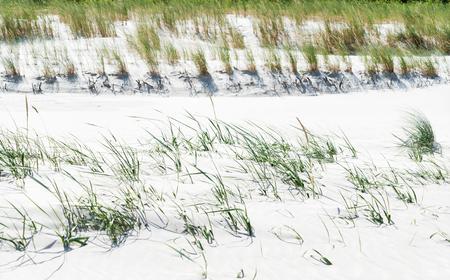 summer Baltic Sea Stock Photo