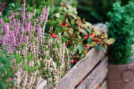 Blumenladen im Freien Standard-Bild