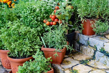 different herbs and vegetables in the pot. container garden