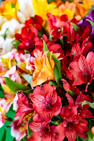 colorful freesia flowers top view, natural background