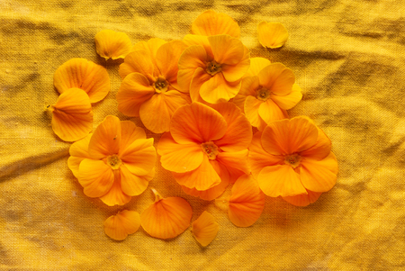 orange primroses on the orange linen fabric