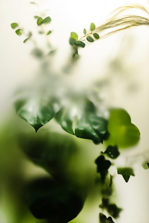 Green leaves texture Stock Photo