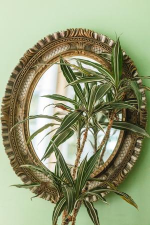 Dracaena marginata in a pot  near mirror Stock Photo
