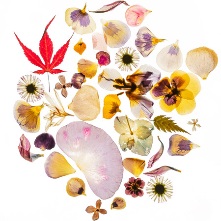 dried flowers on the white background