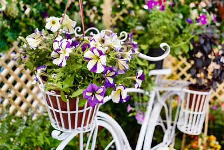 petunia flowers in the pot Banco de Imagens