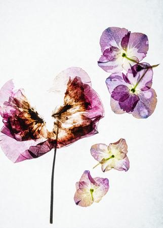 dry flower Stok Fotoğraf