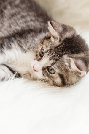 Little kitten lies comfortably on a fluffy blanket