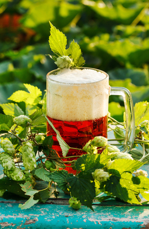 Hops with beer Stock Photo