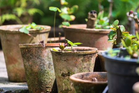 plants in the pots, greenhouse Stock fotó