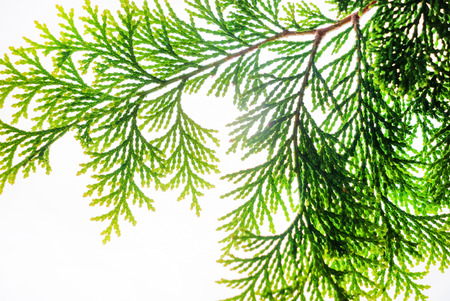 green leaf isolated on the white Zdjęcie Seryjne