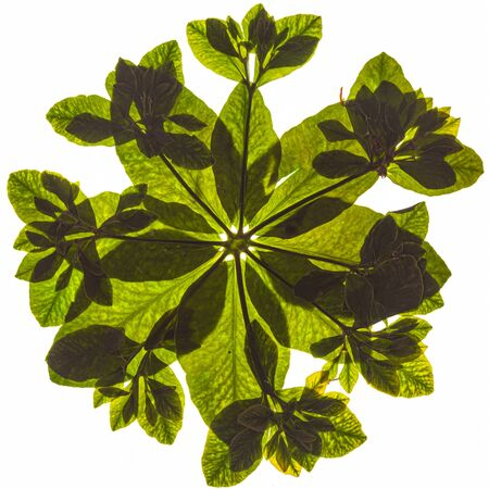 hoja verde sobre fondo blanco
