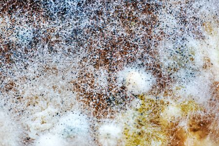Mold on food, closeup for texture Stock Photo