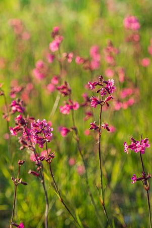 Summer meadow with pink flowers 스톡 콘텐츠 - 127239302