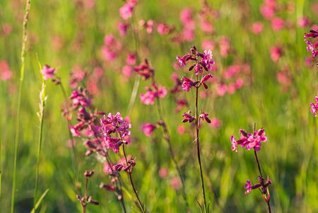 summer meadow with pink flowers 스톡 콘텐츠