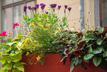 nice flowers in the containers