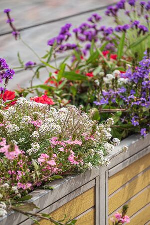 nice flowers in the containers 版權商用圖片 - 128582883