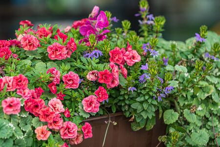 nice flowers in the containers 版權商用圖片 - 128582892